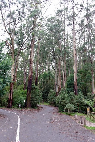 The Dandenong Ranges, Belgraves - Victoria, Australia (15)
