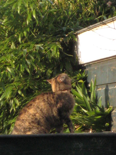 Babette on the roof