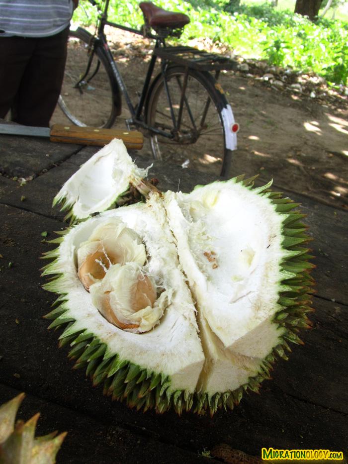 durian-in-zanzibar