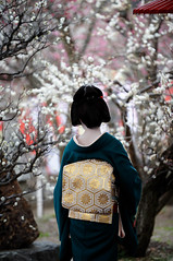 (Tamayura) Tags: japan nikon kyoto maiko geiko teaceremony feb kansai d3 kitanotenmangu baikasai 2011 kamishichiken plumblossomfestival 70200mmf28gvrii 201102251450530