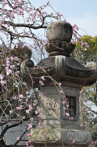 Plum Blossoms and Old Lanterns