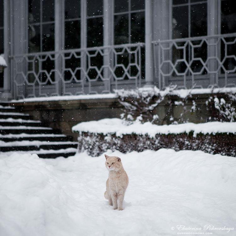 Voroncov_palace__winter_29
