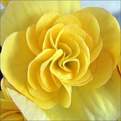 Kayla's flowers