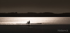 Last rower (Neternis) Tags: shadow sky lake man black reflection water silhouette horizontal silver dark person mirror see boat wasser alone ship horizon paddle peaceful row calm figure oar outline chiemsee contour rower rudern ruderer
