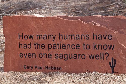 Patience in the Desert