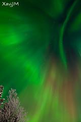 Northen light / Aurora boreal (XaviJM) Tags: tree night suomi finland landscape lights noche sony aurora lapland 1750 nocturna tamron nocturne northen auroraborealis borealis boreal finlandia auroras laponia northenlights a500 boreales aurorasboreales auroraboreal tamronspaf1750mmf28xrdiiildasphericalif vasatokka sonya500