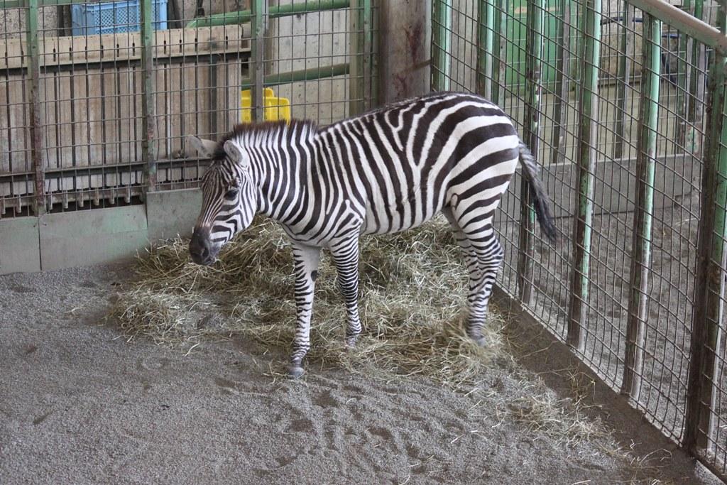 Sapporo Maruyama Zoo (9)