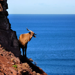 A wild goat feeling home at Menorca's desolate high cliffs (Bn) Tags: blue red sea moon holiday beach water animal forest swimming swim landscape geotagged island back high dangerous spain sand woods mediterranean crystal cove dunes dune rocky peaceful goat lagoon calm cliffs unesco formation clear virgin caves pines edge limestone vegetation nudist coastline remote dare calas nudity bays desolate topf100 climate isolated menorca laid secluded minorca reddish unspoiled balearic maan watercrystal hillsides naturists 100faves wildgoat nuturism caladelpilar geomenorca environmentsunescobiosphere reservemediterranean waterparadiseparadise beachspainbalearicsmenorcaturquoise islandsrocky geo:lon=3973548 geo:lat=40052499