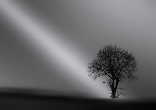 GENESIS (The secret tree) -  explore #190