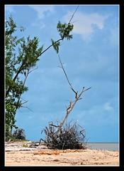 Empty beach, Melville Island (oosh) Tags: nt au australia farnorth northernterritory topend wetseason tiwiislands afsvrzoomnikkor70200mmf28gifed melvilleisland