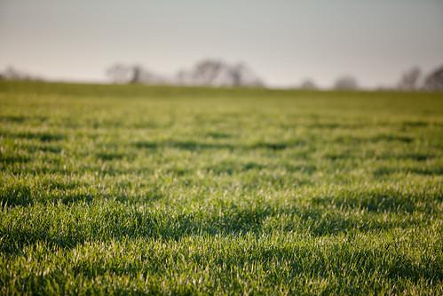 Crops in focus