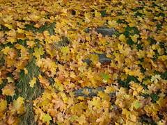 """Efterårsfarver • <a style=""""font-size:0.8em;"""" href=""""http://www.flickr.com/photos/53551333@N05/5525319057/"""" target=""""_blank"""">View on Flickr</a>"""