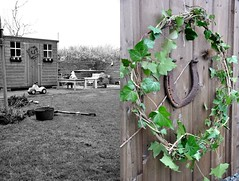 Ivy wreaths (Crafty Mother) Tags: gardens shed weekending ivywreath