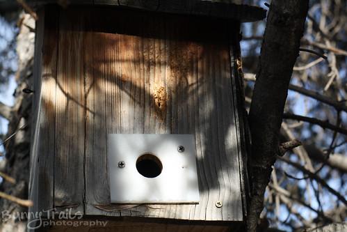69 - bird house