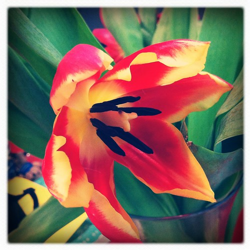 Tulipstamatic