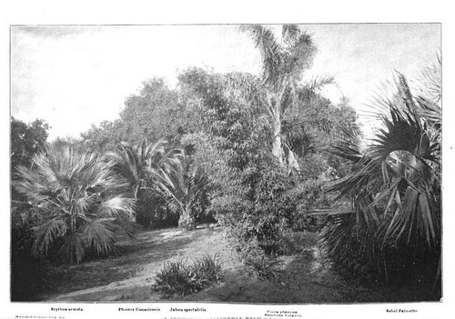 Early Lotusland 1896 - Kinton Stevens - Out West Mag