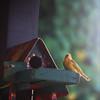 hey You!!! (@petra) Tags: summer bird nikon 2011 —obramaestra— ppphotography tomyflickrladyfriends manymoretobeadded