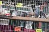 paris birds market (*_Carlo_*) Tags: paris birds market g gettyimagesfranceq1