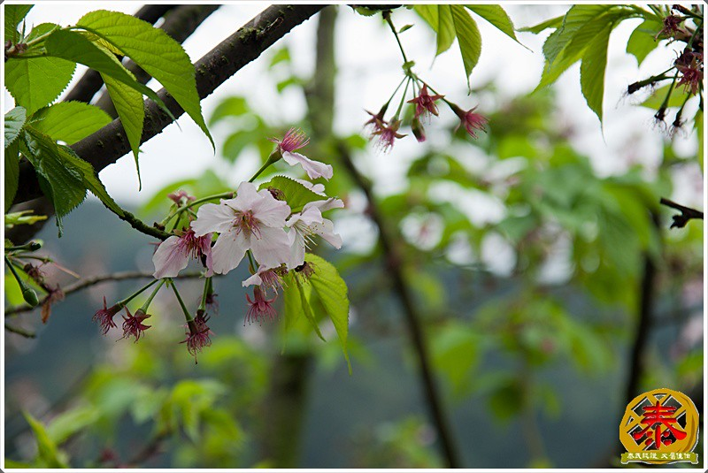 2011-03-19侯硐阿喵村  (37)