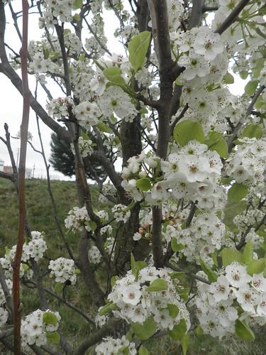 primavera no parque