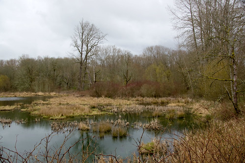Freshwater Pond and Riparian Scene