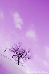 Can you touch the dream with me? (Sous l'Oeil de Sylvie) Tags: sky white snow clouds rural purple pentax dream champs violet ciel mauve neige nuage campagne arbre blanc colline beauce fense clôture sigma1020mm rêve k7 ruralité sousloeildesylvie