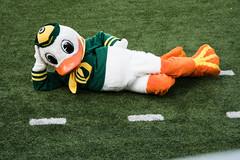 Ducks vs UC Davis 9-3-2016_3097 (boudreaudavid83) Tags: oregon ducks football nikon d500