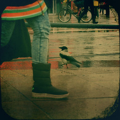 (sommerpfuetze) Tags: street people color bird rain animal square boots leg jeans crow berliner berlinmitte corbie ttv fakettv
