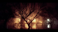 flood (donchris!) Tags: mist silhouette fog night lights long exposure nebel nightshot flood nacht arbres alluvione rbol nights silueta albero bume arbre baum nachts mga drzewo inondations drzewa sylwetka berschwemmung powd inundaciones schattenbild