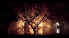 flood (donchris!) Tags: mist silhouette fog night lights long exposure nebel nightshot flood nacht arbres alluvione rbol nights silueta albero bume arbre baum nachts mga drzewo inondations drzewa sylwetka berschwemmung powd inundaciones schattenbild