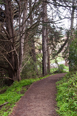 Trees in the Presidio Photo