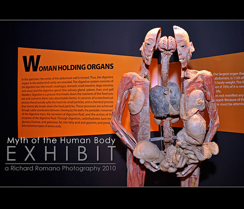 Myth of the Human Body Exhibit 5