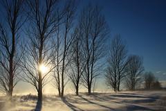 vanishing point (tbug2) Tags: trees winter sunset sky snow landscape vanishingpoint michigan february traversecity