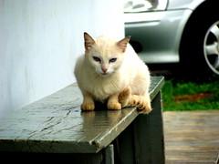 el gato (cleber inoue) Tags: verde blanco branco saopaulo banco gato coche carro posto