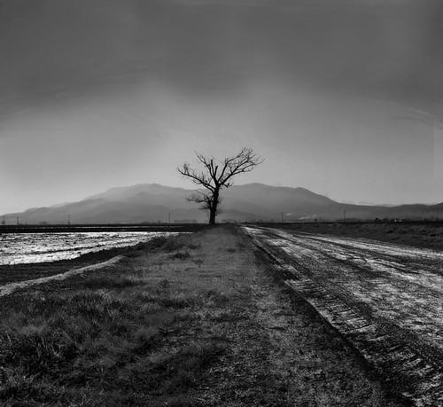 Arbre solitari al Delta de l'Ebre
