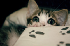 cook (kaleonel) Tags: cook karen gato gatinho leonel bestofcats kaleonel