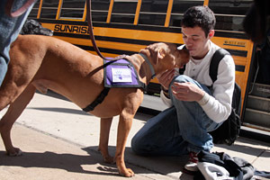 Pit-bull terrier type dog with student from Safe Humane Chicago