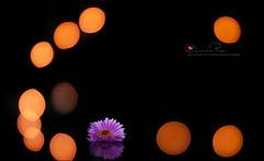ضآيقك اني سعيد ! + الورشة (Abeer Hussein) Tags:
