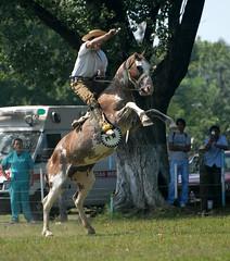doma sabino (Martina V.) Tags: horse argentina caballo