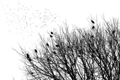 "2011_365049 - Birds • <a style=""font-size:0.8em;"" href=""http://www.flickr.com/photos/84668659@N00/5456346683/"" target=""_blank"">View on Flickr</a>"
