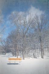 A Bench on the Trail (paulRcsizmadia) Tags: trees tree art texture bench artistic creative bluesky layers photoshopelements layered postprocessing loraincountymetroparks paulrcsizmadia buroaktrail