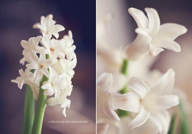 .spring soon.