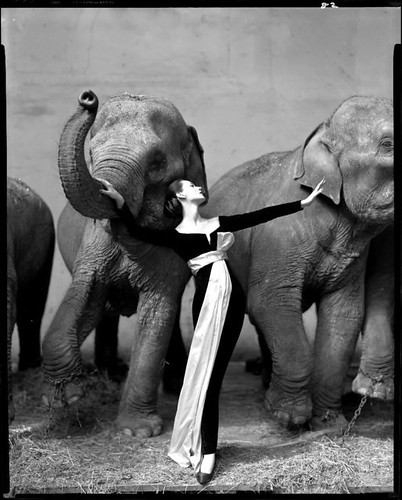avedon-dovima-with-elephants1