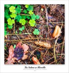 La nature se réveille (photomartial) Tags: color macro nature nikon bretagne arbres d200 arbre couleur feuille flore carré photomartial