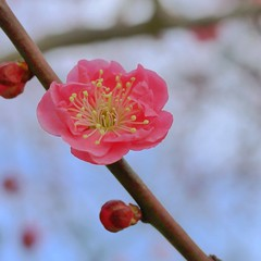 20110227_0034 (shagzi23) Tags: ume gf1 g20mmf17 flickr1