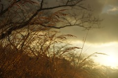20110228 sunset time (Harvey-mush-Mushman) Tags: zeiss sony jena carl flektogon 25mm nex5