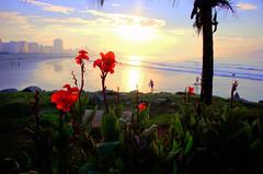 Flores (Wanderlei Talib) Tags: flores praia orla santos amanhecer emissário