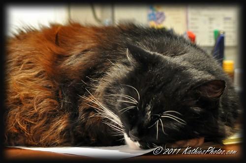 60-365 Contented cat