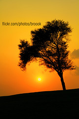 واذا امتلى جوف الشجر بالعصافير (【sт☆я Q6r】bb:21461562) Tags: sunset tree star doha qatar do7a qtr قطر ستار الدوحه broook q6r المغيب