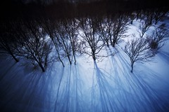 Long Shadow (jasohill) Tags: trees shadow snow ski art texture japan forest japanese long pattern resort aomori backgrounds  hirosaki   tohoku    2011  naqua